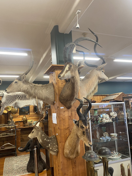 Taxidermy & Fishing Auction 23/06/2020 6pm