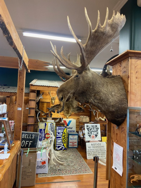 MAN SHED TAXIDERMY & AUTOMOBILIA AUCTION SATURDAY MAY 1st 11am